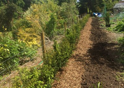 Hedge Laying and Countryside Management